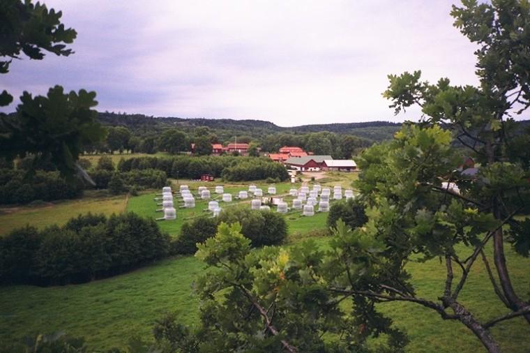 Uddling_Östad_skog