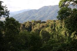 Nyungwe rainforest, Rwanda